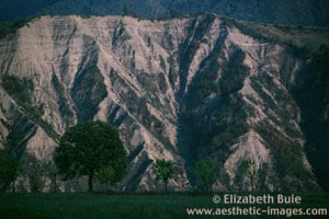 Tree and rock face, outside Bologna (copyright Elizabeth Buie)