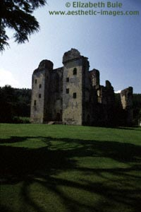 A tree shades the front lawn of Old Wardour Castle (image no. 1AD53-23, © Elizabeth Buie)