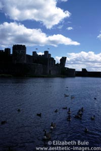 Ducks and geese in moat, Caerphilly Castle (image no. 2BEC2-10, © Elizabeth Buie)